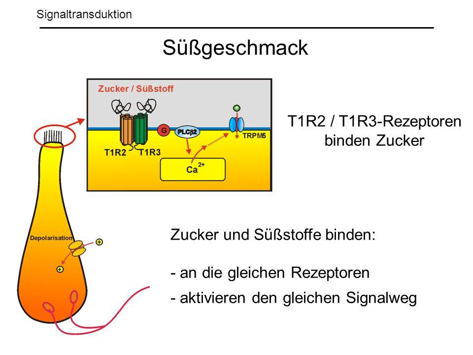 Süßgeschmack T1R2 / T1R3-Rezeptoren binden Zucker
