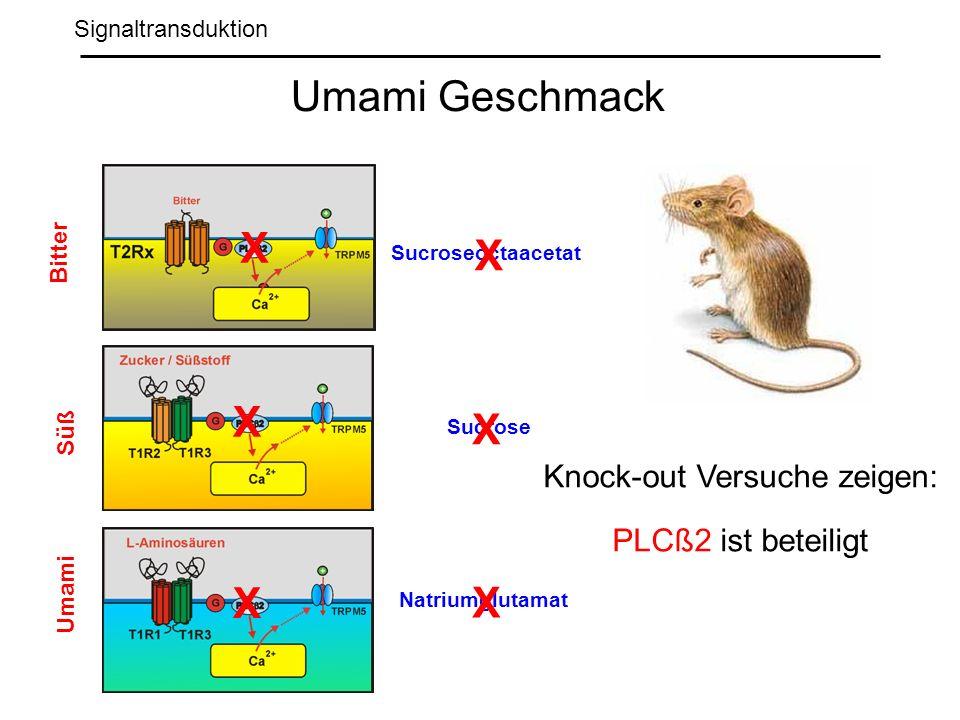 Knock-out Versuche zeigen: PLCß2 ist beteiligt