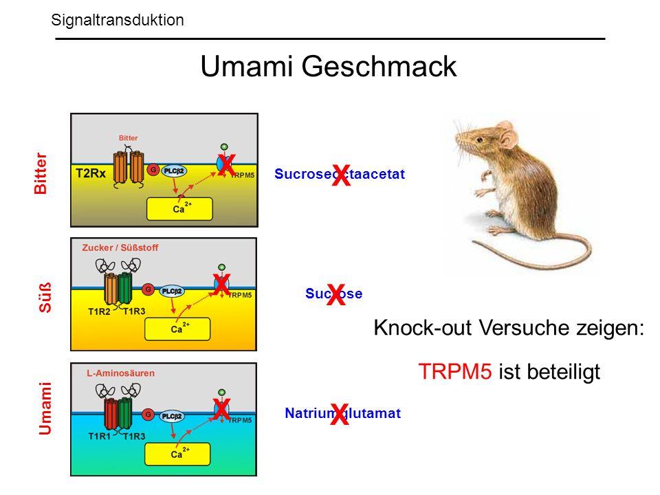 Knock-out Versuche zeigen: TRPM5 ist beteiligt