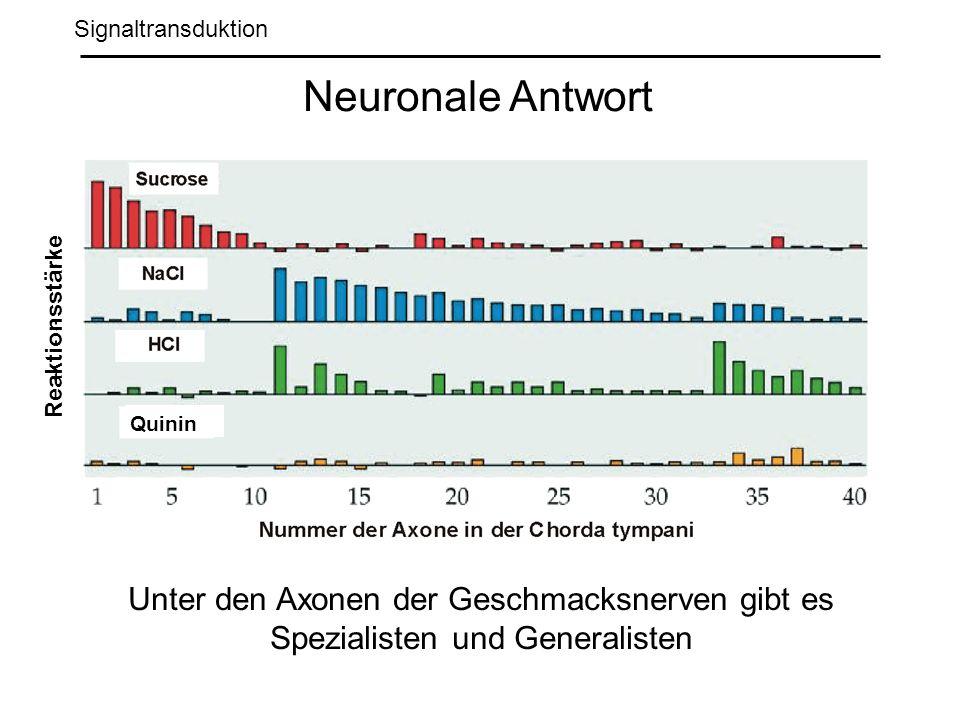 Signaltransduktion Neuronale Antwort. Reaktionsstärke.