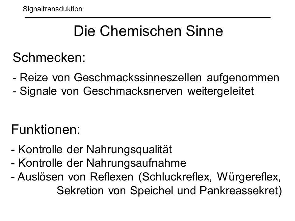 Die Chemischen Sinne Schmecken: Funktionen: