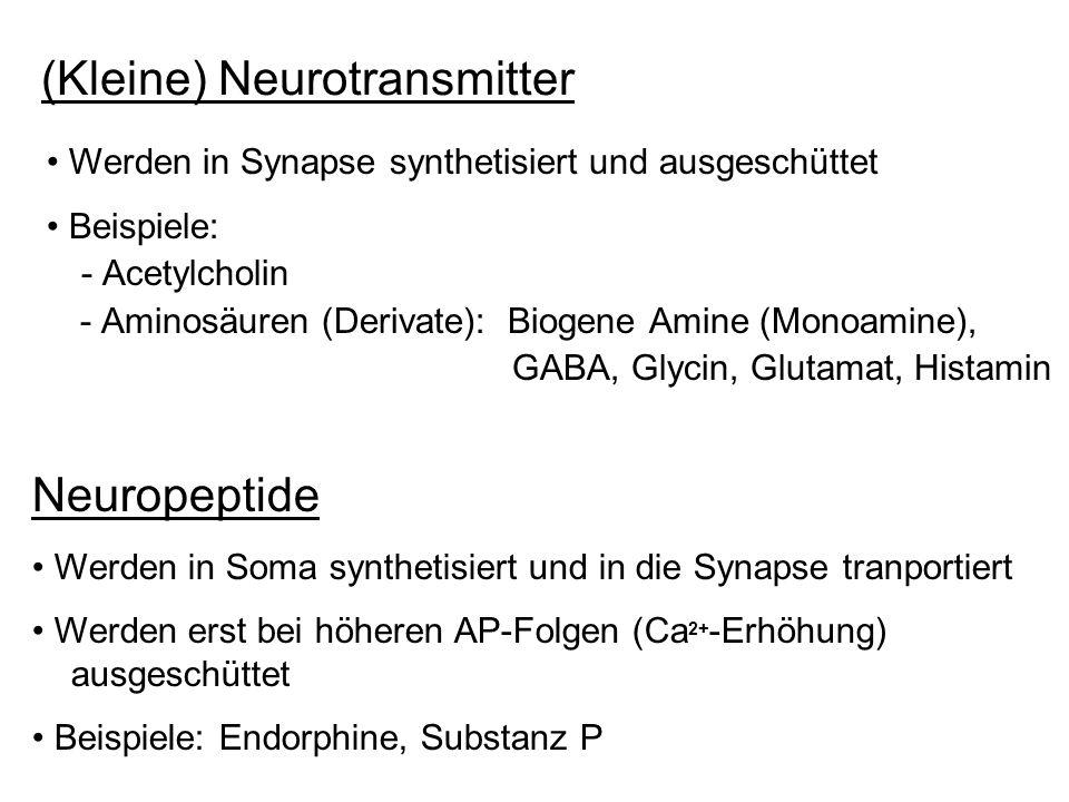 (Kleine) Neurotransmitter