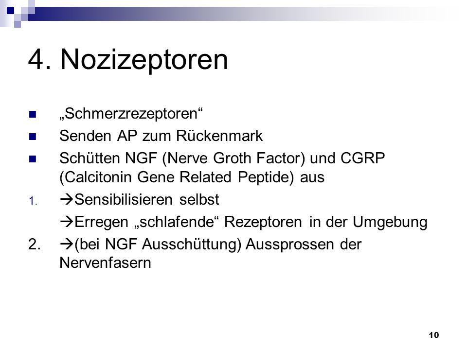 "4. Nozizeptoren ""Schmerzrezeptoren Senden AP zum Rückenmark"