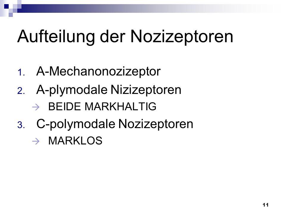 Aufteilung der Nozizeptoren
