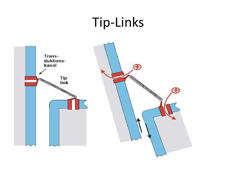 Tip-Links