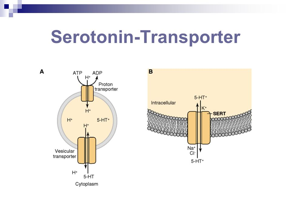 Serotonin-Transporter