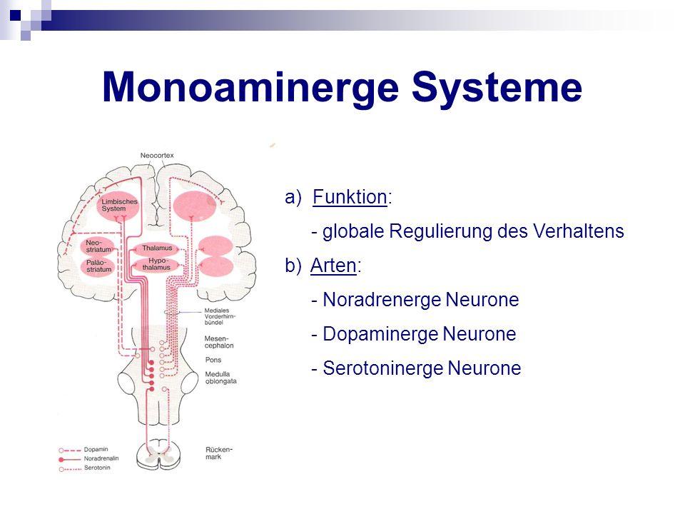 Monoaminerge Systeme a) Funktion: - globale Regulierung des Verhaltens