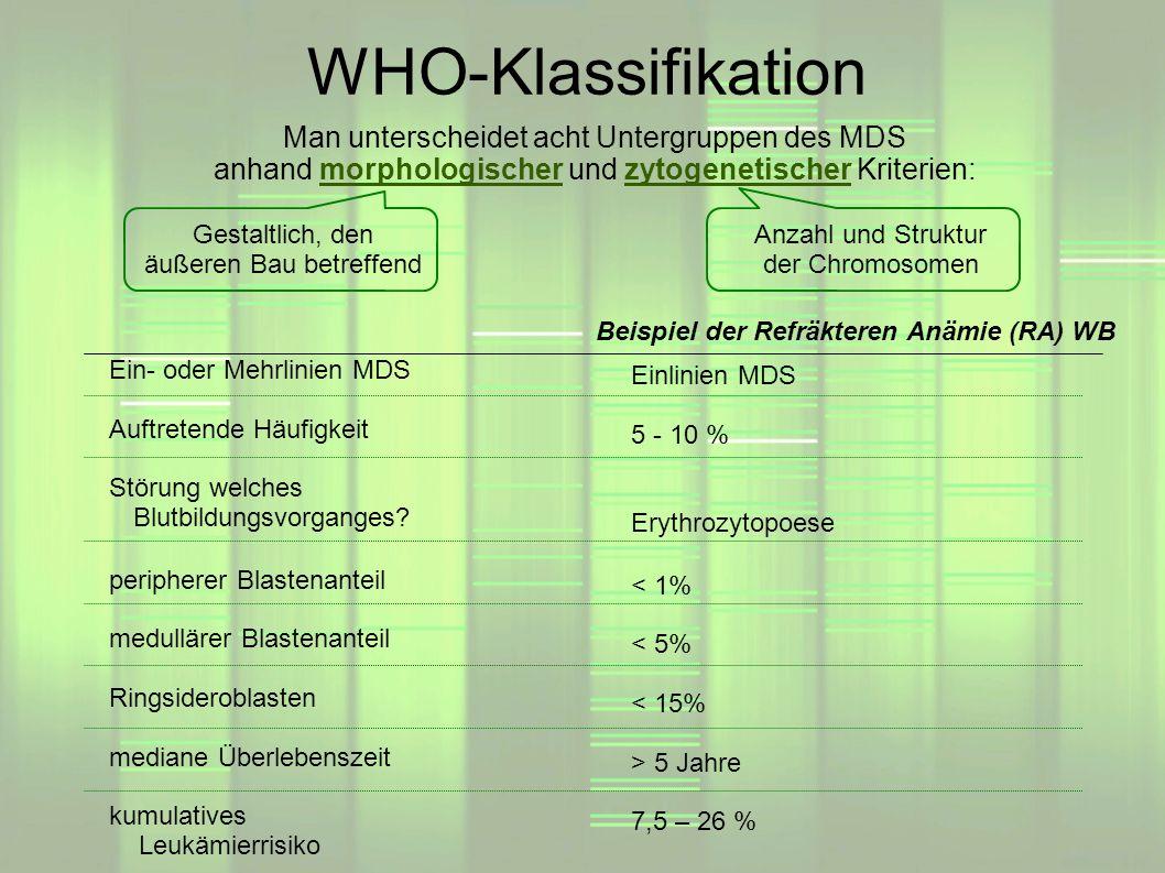 Beispiel der Refräkteren Anämie (RA) WB