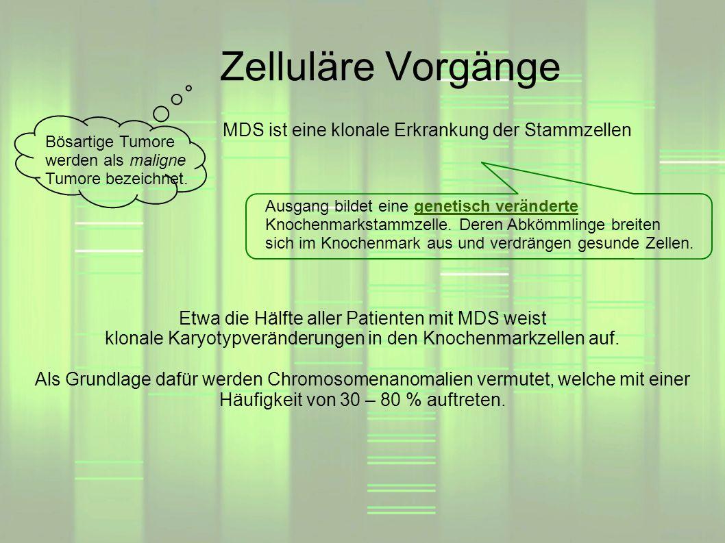 Zelluläre Vorgänge MDS ist eine klonale Erkrankung der Stammzellen