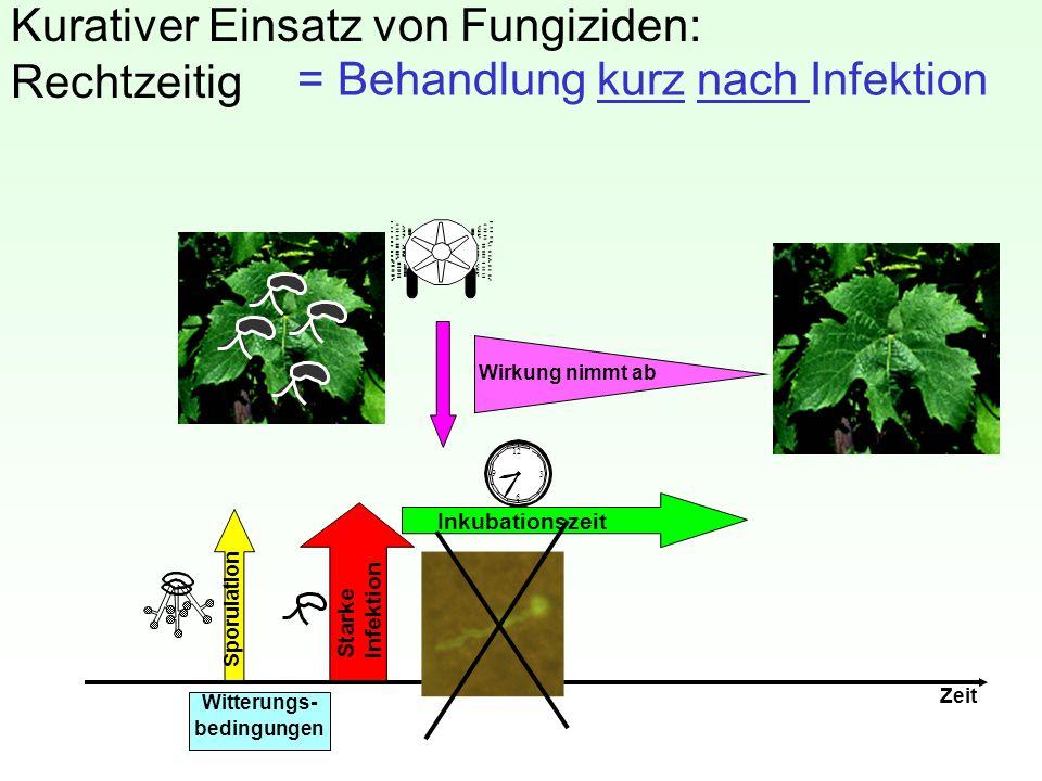Kurativer Einsatz von Fungiziden: Rechtzeitig