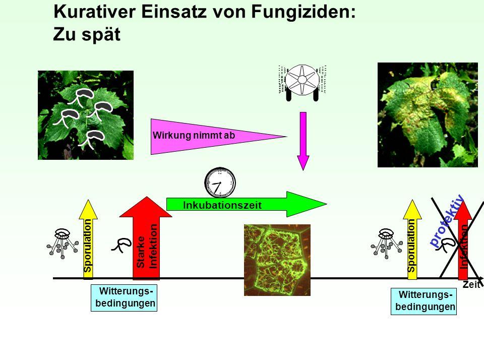 Kurativer Einsatz von Fungiziden: Zu spät