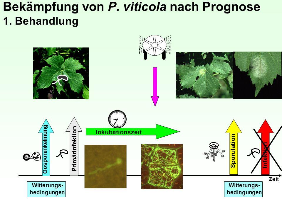 Bekämpfung von P. viticola nach Prognose 1. Behandlung