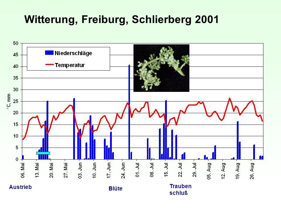 Witterung, Freiburg, Schlierberg 2001