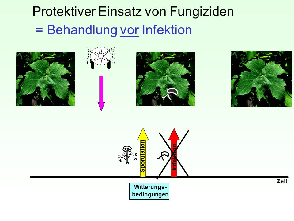 Protektiver Einsatz von Fungiziden
