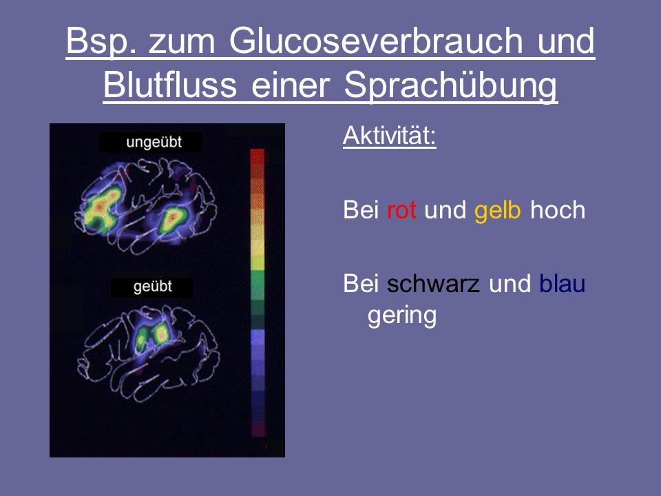 Bsp. zum Glucoseverbrauch und Blutfluss einer Sprachübung