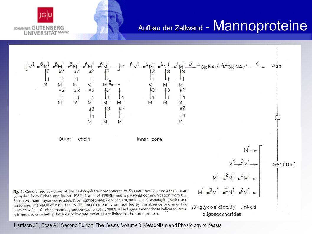Aufbau der Zellwand - Mannoproteine
