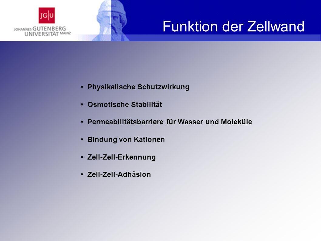 Funktion der Zellwand • Physikalische Schutzwirkung