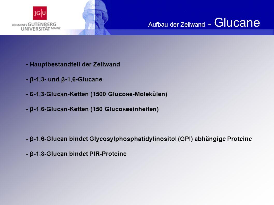 Aufbau der Zellwand - Glucane