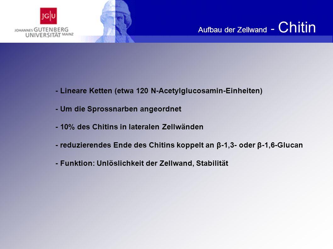 Aufbau der Zellwand - Chitin