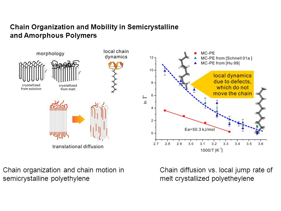 Chain Organization and Mobility in Semicrystalline and Amorphous Polymers