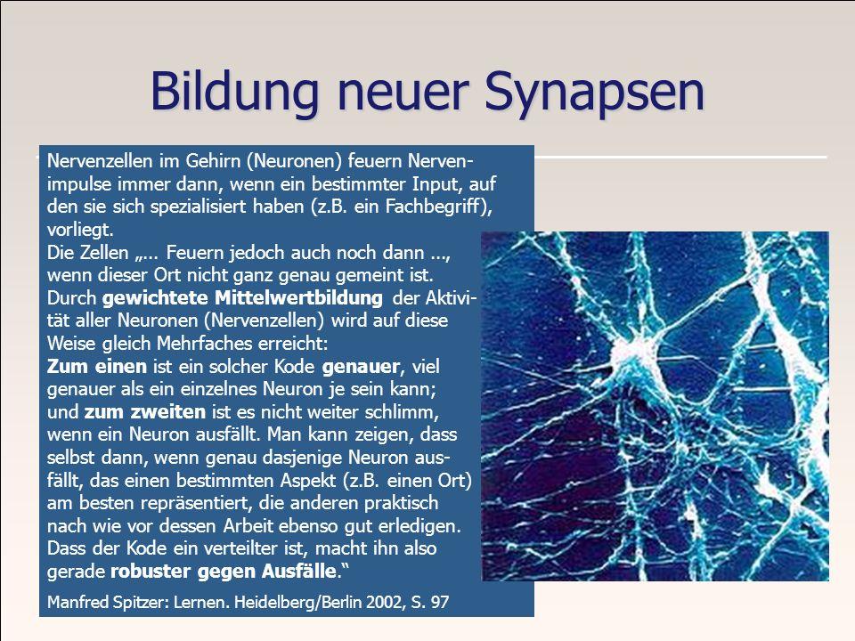 Bildung neuer Synapsen