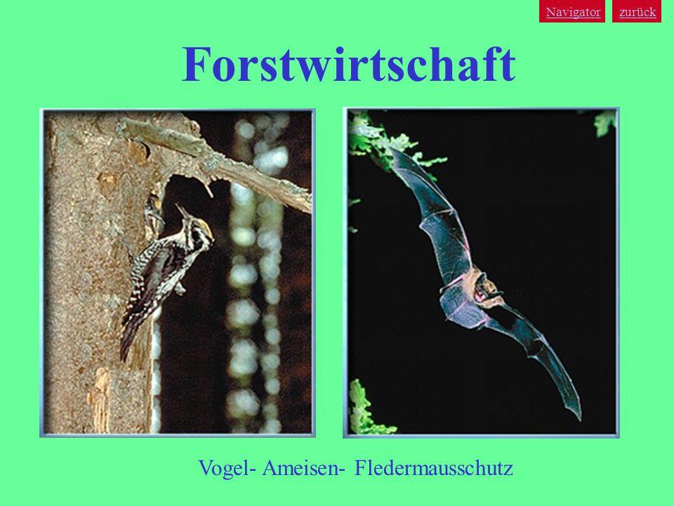 Navigator zurück Forstwirtschaft Vogel- Ameisen- Fledermausschutz