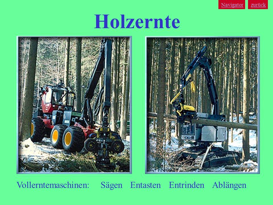 Holzernte Vollerntemaschinen: Sägen Entasten Entrinden Ablängen