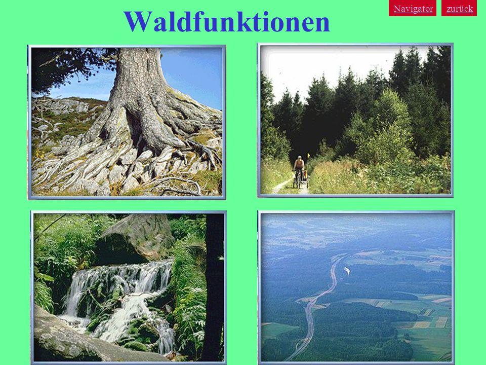 zurück Navigator Waldfunktionen