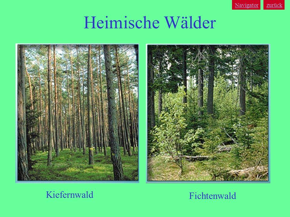 Navigator zurück Heimische Wälder Kiefernwald Fichtenwald