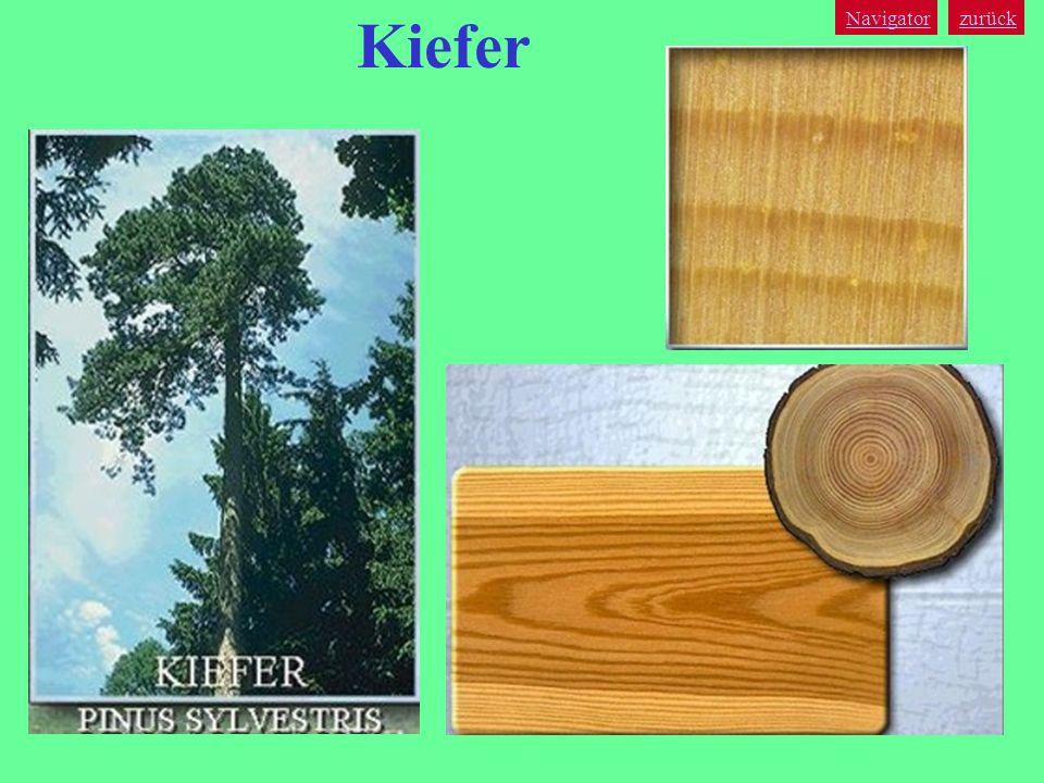 zurück Navigator Kiefer