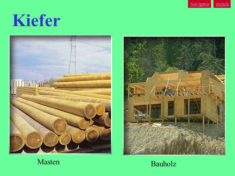 Navigator zurück Kiefer Masten Bauholz