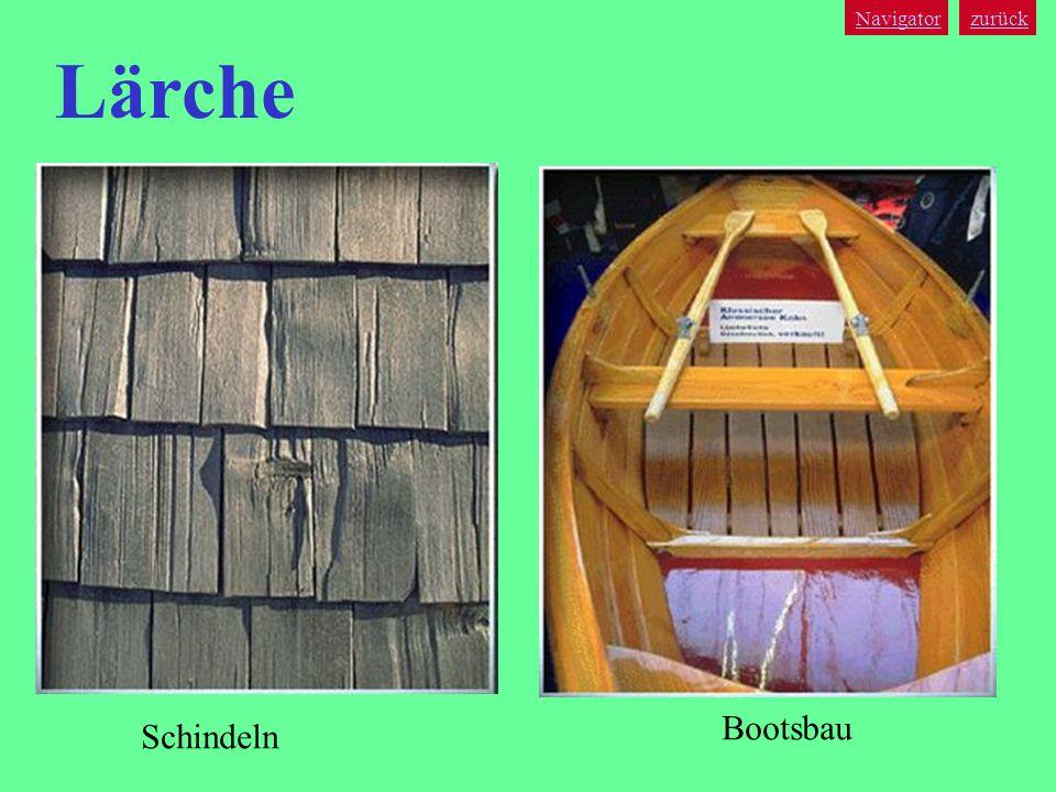 Navigator zurück Lärche Bootsbau Schindeln