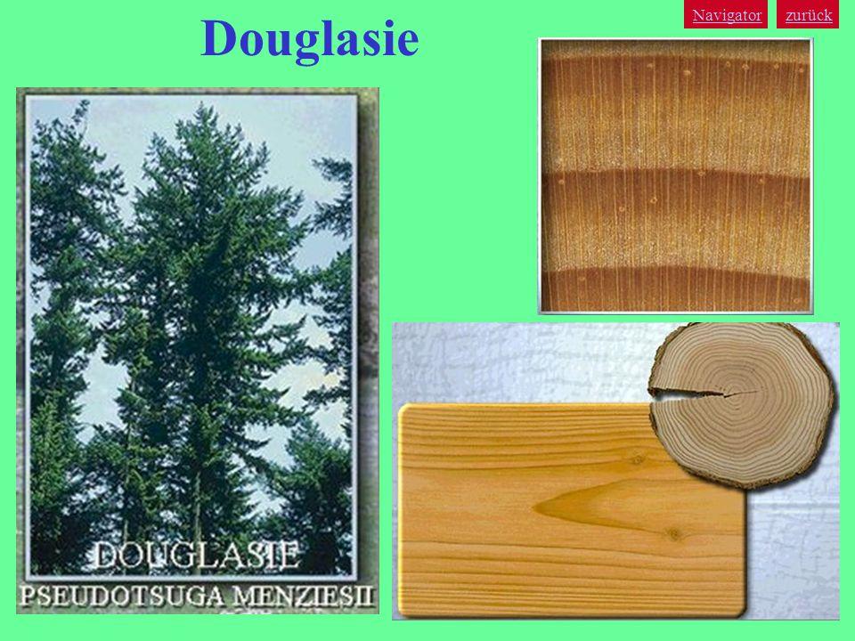 zurück Navigator Douglasie