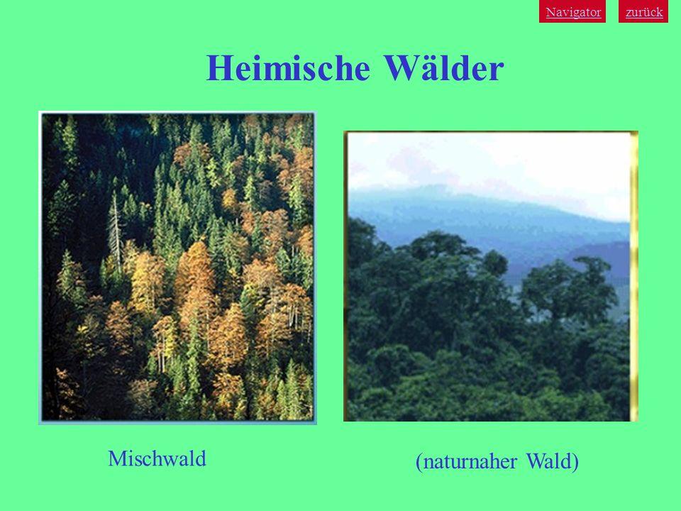 Navigator zurück Heimische Wälder Mischwald (naturnaher Wald)