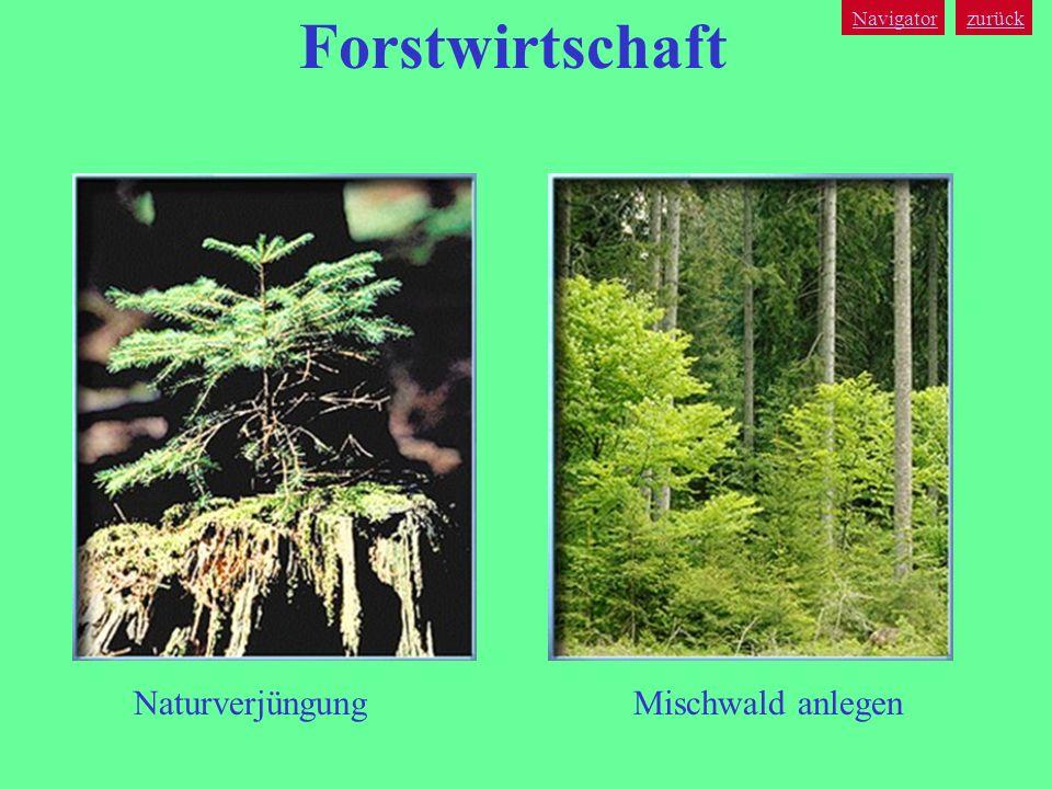 Forstwirtschaft Navigator zurück Naturverjüngung Mischwald anlegen