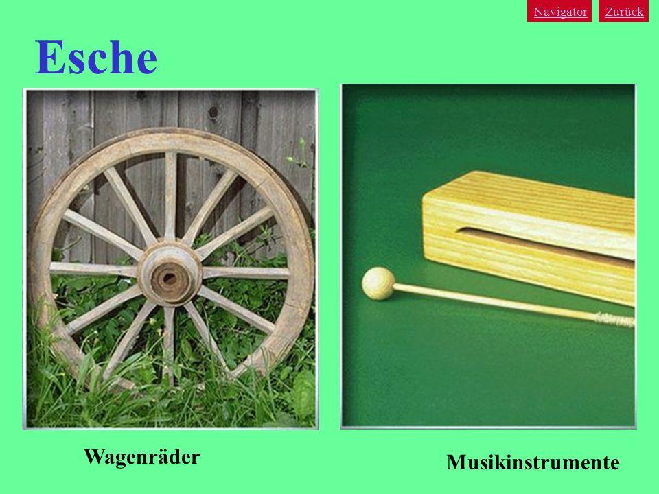 Navigator Zurück Esche Wagenräder Musikinstrumente