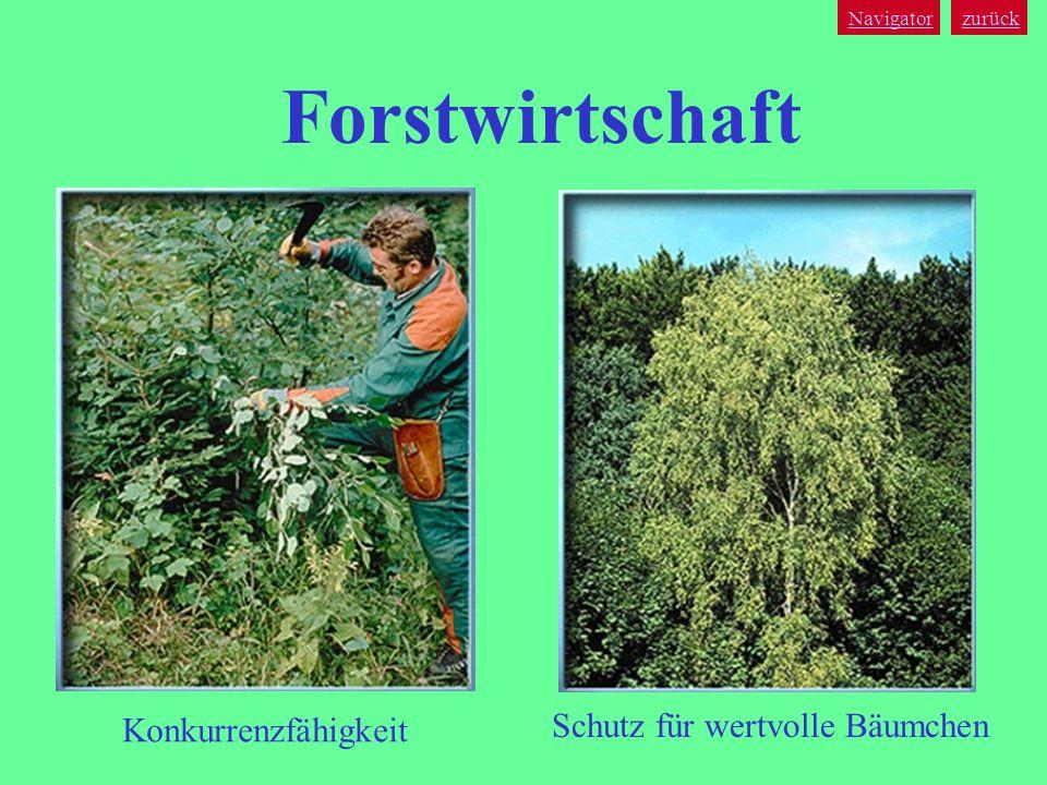 Forstwirtschaft Schutz für wertvolle Bäumchen Konkurrenzfähigkeit