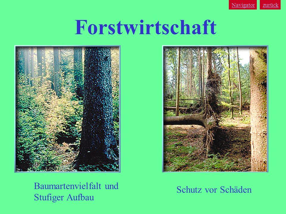 Forstwirtschaft Baumartenvielfalt und Schutz vor Schäden
