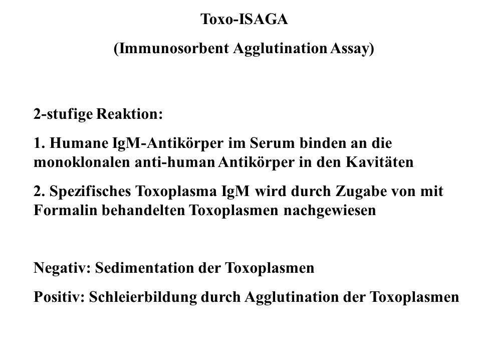 (Immunosorbent Agglutination Assay)