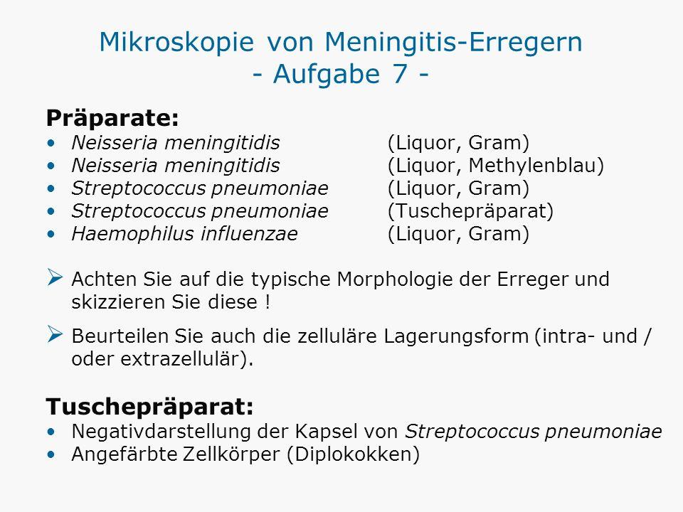 Mikroskopie von Meningitis-Erregern - Aufgabe 7 -