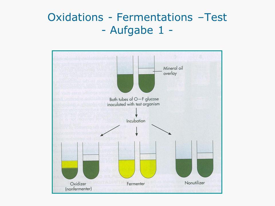 Oxidations - Fermentations –Test - Aufgabe 1 -