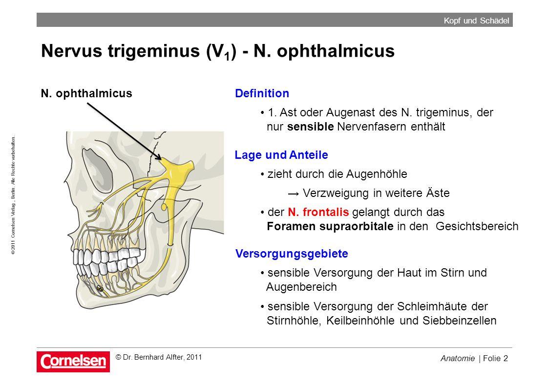 Nervus trigeminus (V1) - N. ophthalmicus