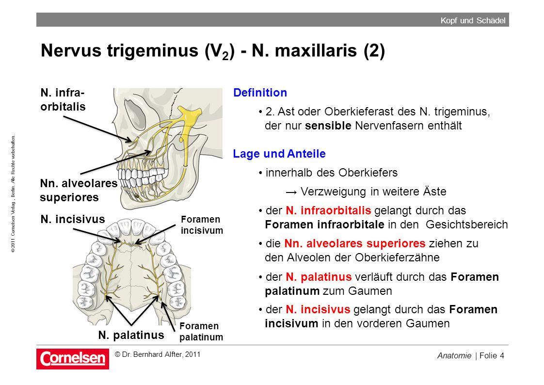 Nervus trigeminus (V2) - N. maxillaris (2)
