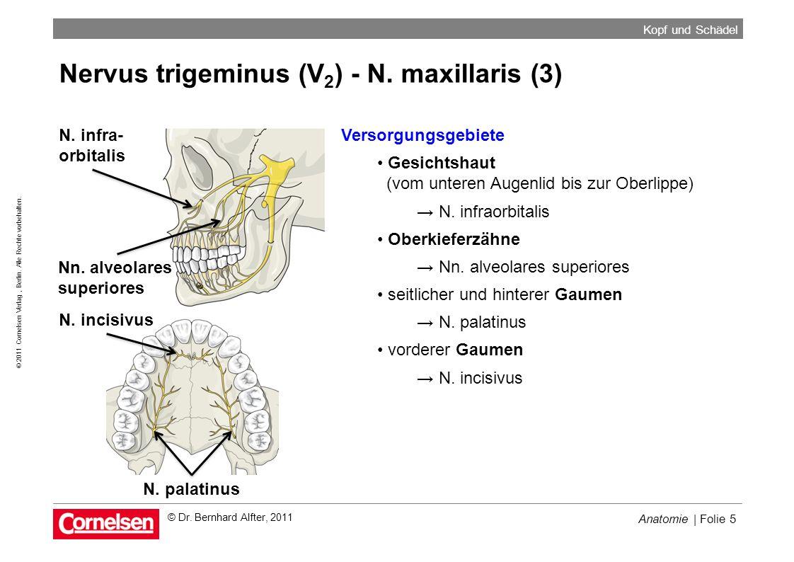 Nervus trigeminus (V2) - N. maxillaris (3)