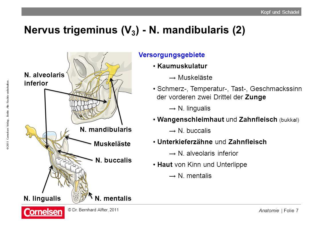 Nervus trigeminus (V3) - N. mandibularis (2)