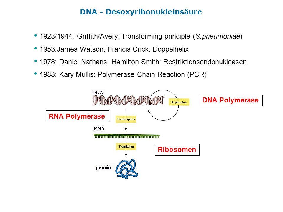DNA - Desoxyribonukleinsäure