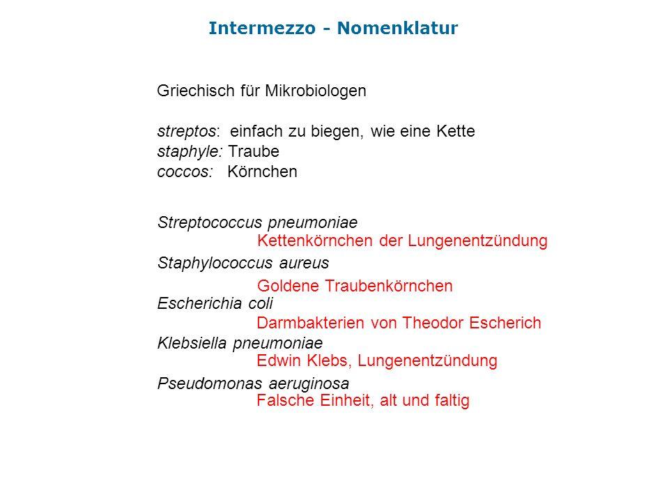 Intermezzo - Nomenklatur