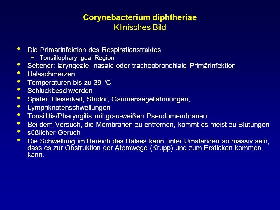 Corynebacterium diphtheriae Klinisches Bild