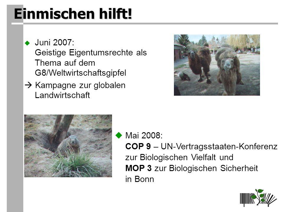 Einmischen hilft! Juni 2007: Geistige Eigentumsrechte als Thema auf dem G8/Weltwirtschaftsgipfel.  Kampagne zur globalen Landwirtschaft.