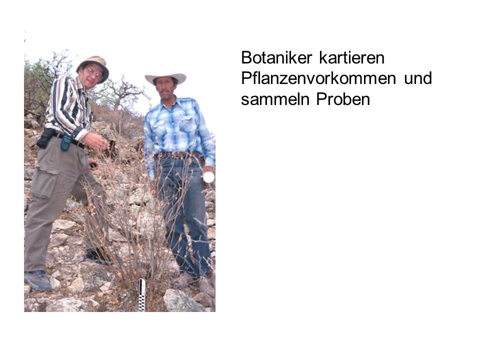 Botaniker kartieren Pflanzenvorkommen und sammeln Proben